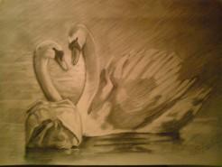 Picturi in creion / carbune Lebede