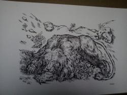Picturi alb negru Leu-studiu